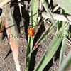 Ladybug<br /> (c) Kalei Nuuhiwa