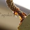 Pokalakala.Kapalama, Oahu<br /> (c) Kalei Nuuhiwa