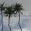 Halapepe.Kona Mauka Road<br /> (c) Kaumakaiwa Kealiikanakaoleohaililani