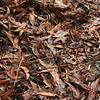 Koa_Compost<br /> (c) Kalei Nuuhiwa