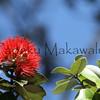 Ohia Lehua_Pua<br /> (c) Kalei Nuuhiwa