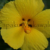 Maohauhele.Kahakuloa<br /> (c) Kalei Nuuhiwa