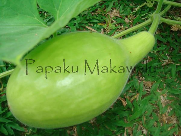 Ipu.Kahakuloa<br /> (c) Kuulei Kanahele