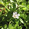 Naenae<br /> Bacoba<br /> Kalei Nuuhiwa<br /> (c) 2011