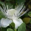 Maiopilo.Keauhou, Kona<br /> (c) Kalei Nuuhiwa