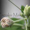 Ipu_Pua.Pa Hoaka<br /> (c) Kuulei Kanahele