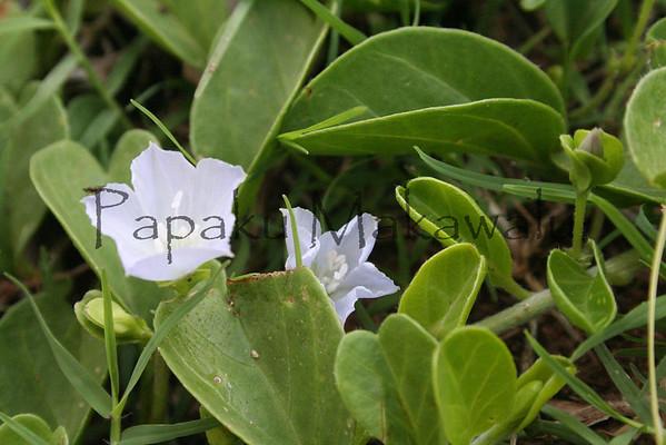 Pauohiiaka<br /> (c) Kalei Nuuhiwa