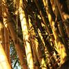 Ohe<br /> Kalei Nuuhiwa<br /> (c) 2011