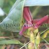 Awikiwiki.Laupahoehoe<br /> (c) Kuulei Kanahele