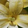 Alula.Maui<br /> (c) Pualani Kanahele