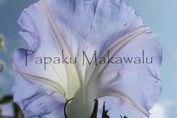 Koali<br /> (c) Kalei Nuuhiwa