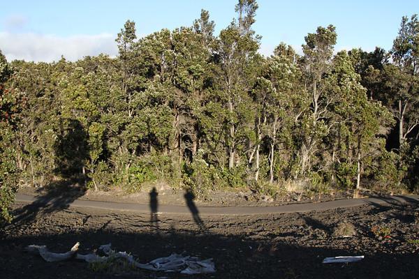 Ohia Forest - Kilauea<br /> (c) Kalei Nuuhiwa