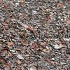 Ohia_Compost<br /> (c) Kalei Nuuhiwa