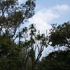Halapepe.Kona Mauka Road<br /> (c) Kuulei Kanahele