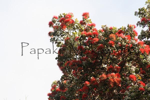 Ohia Lehua.Kalopa<br /> (c) Kalei Nuuhiwa