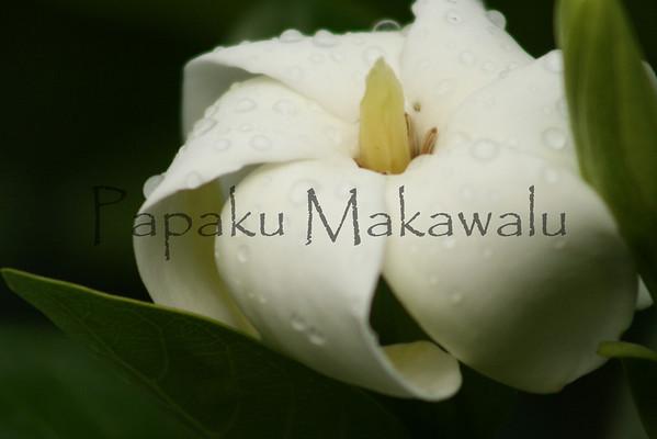 Nau<br /> (c) Kalei Nuuhiwa