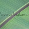 Maia.Panaewa<br /> (c) Kuulei Kanahele
