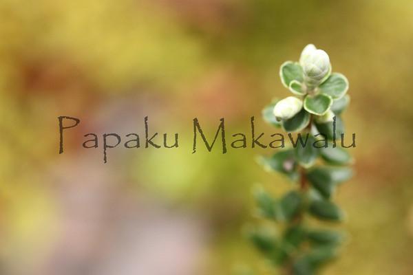 Pukiawe<br /> Saddle<br /> (c) Kuulei Kanahele