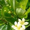 Alula.Maui<br /> (c) Kuulei Kanahele