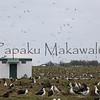 Moli<br /> (c) Kalei Nuuhiwa