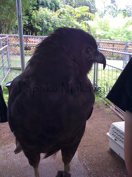 Io.Panaewa Zoo<br /> (c) Kuulei Kanahele