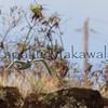 Koaekea, Waimea, Kauai<br /> (c) Kalei Nuuhiwa