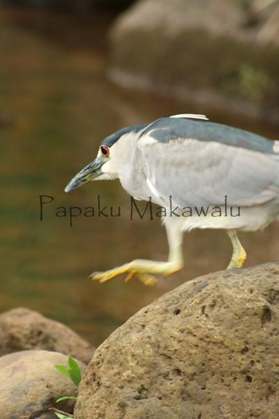 Aukuu.Kahakuloa<br /> (c) Kalei Nuuhiwa