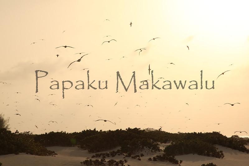 manu<br /> (c) Kalei Nuuhiwa
