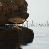 Aukuu.Hapaialii<br /> (c) Kalei Nuuhiwa