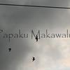 Flying kolea<br /> (c) Kalei Nuuhiwa 2011