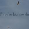 Io.Panaewa<br /> (c) Kalei Nuuhiwa
