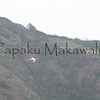Koae Kea.Makamakaole<br /> (c) Kalei Nuuhiwa
