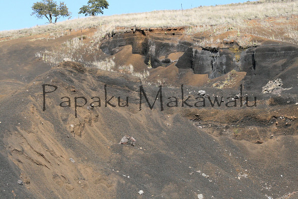 Akeke<br /> (c) Kalei Nuuhiwa