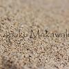 One Kea. Makua<br /> (c) Kuulei Kanahele