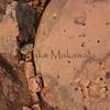Cracking Stone of Kahoolawe<br /> (c) Kalei Nuuhiwa