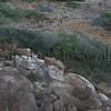 Halona Bedrock.Kanaloa Kahoolawe<br /> (c) Kalei Nuuhiwa