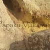 (c) Kalei Nuuhiwa 2012   - Sulphur Banks Puhimau & Ha'akulamanu