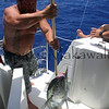 fifth catch<br /> Summer Solstice<br /> 6.21.07<br /> Morning outside of Nihoa<br /> (c) Kalei Nuuhiwa