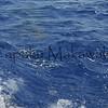last catch - see da sharkey<br /> Summer Solstice<br /> 6.21.07<br /> Morning outside of Nihoa<br /> (c) Kalei Nuuhiwa