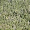 Panaewa forest<br /> (c) Kalei Nuuhiwa