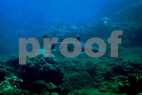 Kahoolawe Dive