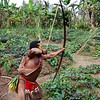 """Demonstrating his bow and arrow technique. When Huli men are still young boys, they begin to learn the warrior arts, including use of the bow and arrow, spear throwing and hand combat weapons such as axes and machetes. <br /> The Huli and other tribal peoples of the Southern Highlands still periodically engage in clan warfare. When a person is wronged, it is normal to carry out retaliation, very much an """"eye for and eye"""" concept. This of course can result in long running violent feuds that result in a spiral of retaliatory violence. Four years before we made this trip, the small local Tari airport that we flew into was closed down due to warfare between rival Huli clans.  Tari Highlands, Southern Highlands Province, Papua New Guinea"""