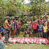 Gathering the Pigs for Compensation, Southern Highlands, Papua New Guinea