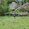 Woman of Dani Tribe carrying load back to village. West Papua
