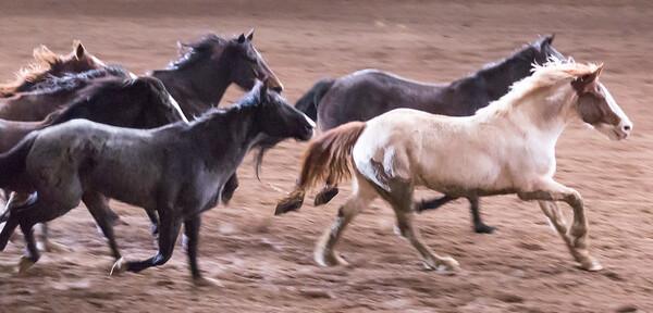 Parada del Sol Rodeo Scottsdale Arizona 2 March 2014 005