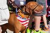 July 4th, 2014 Parade<br /> Highland Park, IL  60035
