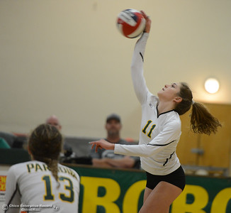 Paradise High's Elaina West spikes the ball to Las Plumas in the Northern Section Division III first-round playoff match Wednesday November 1, 2017 in Paradise, California. (Emily Bertolino -- Enterprise-Record)