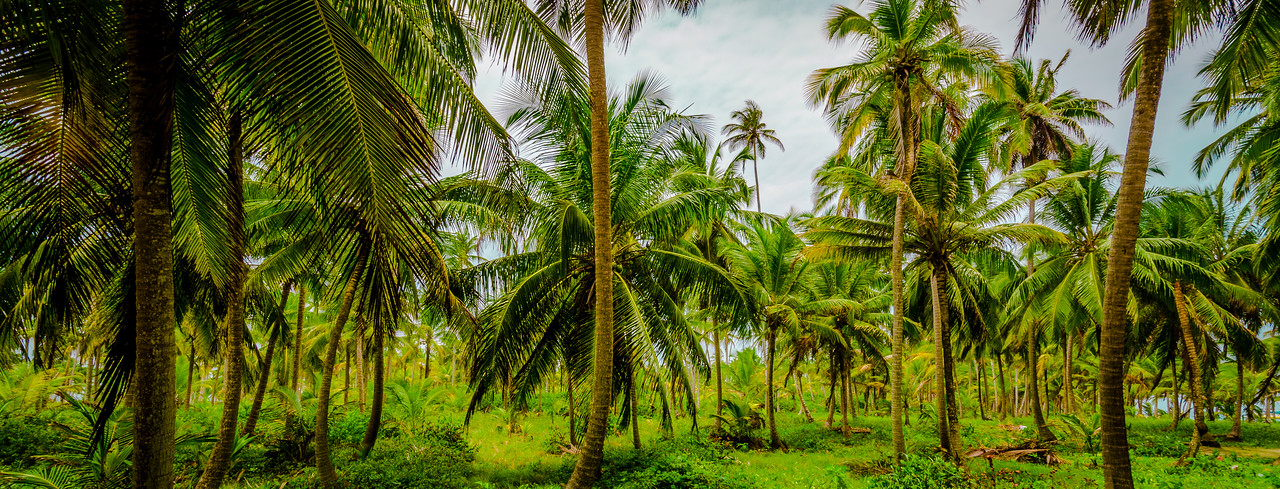 Green tropical Paradise Photography By Messagez com