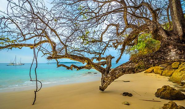 Original Paradise Tree Photography By Messagez.com