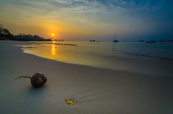 The Magical Paradise Coconut Photography 6 By Messagez com